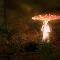 Лесной житель. :: Алексей Хаустов