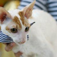 про кота (2) :: Маргарита