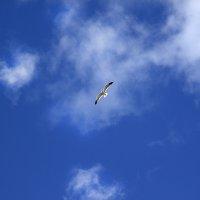 Небо :: nakip1