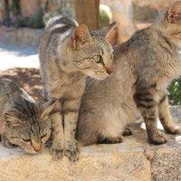 Коты :: Мария Копысова