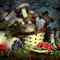 Натюрморт с грибами :: Денис Матвеев