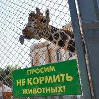 Жираф против таких условий! :: Юлия Годовникова
