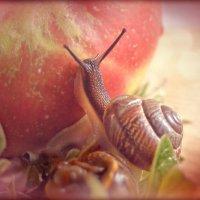 Покорительница яблок. :: Елена Kазак