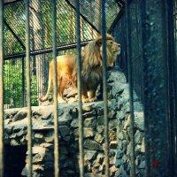 Король лев :: Света Кондрашова