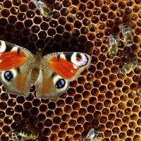 Бабочка :: Наталия Колосюк