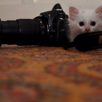 Юный фотограф :: Ирина Исаева