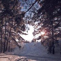 Зима в балахнинском лесу :: Павел Зюзин