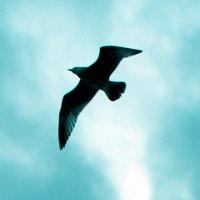 Композиция с птицей :: Mila Romans