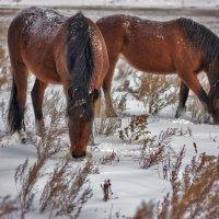 Лошади в поле :: Юлия Павленко