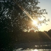 дружба деревца и солнышка... :: Батик Табуев