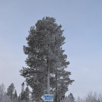 морозный январь на севере :: Anastasia Kuznetsova