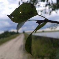 Озеро Вьюны, Беларусь :: Владимир Невмержицкий