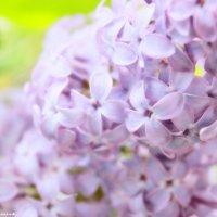 Весна :: Екатерина Скрипник