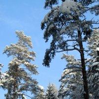 Зимний лес :: Сергей Владимиров