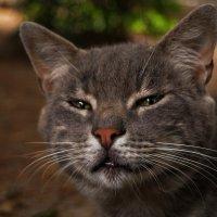 Главарь котячьей банды нашего двора)))) :: Елена Яковлева