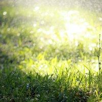 Трава, вода, солнце :: Наталья Тырданова