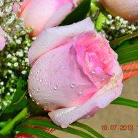 роза :: Ольга Пятилетова