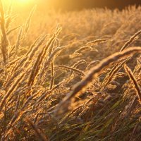 Солнечный рассвет :: Mariya laimite