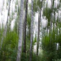 Деревья в динамике2 :: Anna Kurbatova