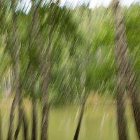 Деревья в динамике :: Anna Kurbatova