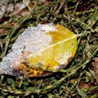 Поздняя Осень :: Алевтина Pozzitiff