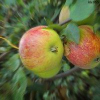 Яблочки :: Алевтина Pozzitiff
