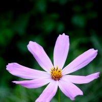 цветочек) :: Анжеліка Гончаренко