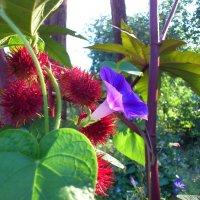цветы :: Виктор Николенко