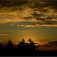 Закатное небо золотистое :: galina tihonova