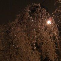 Ледяной дождь :: Марго Короткова