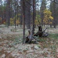 Тени осеннего леса :: Ольга