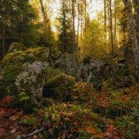 В карельском лесу :: Владимир Колесников