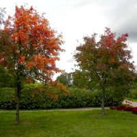 Осенние краски. :: Aleksandr