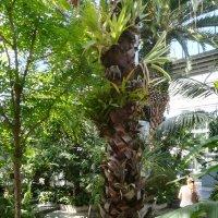 В тропиках-субтропиках :: veera (veerra)