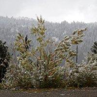 Первый снег. Саяны, сентябрь :: Ольга Иргит