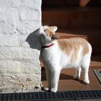 Монастырский кот . :: Любовь