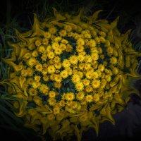 Цветочный пульсар :: Александр Попович