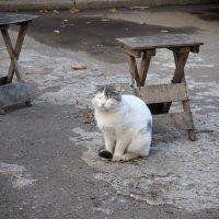 Уличный кот. :: Ильсияр Шакирова