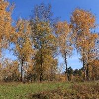 В осеннем лесу :: Лариса