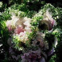 На свету и в тени манят листьев изгибы :: Daria Vorons