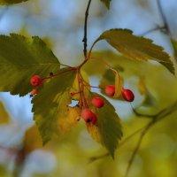 Осенние украшения :: Olcen Len