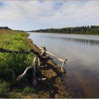 Западная Двина в районе Витебской ГЭС. :: Роланд Дубровский