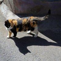 Трёхцветная кошка и её тень :: Татьяна [Sumtime]