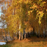 Осенние прогулки в сентябре... :: Нэля Лысенко