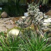 Кактусы и суккуленты ботанического сада :: veera (veerra)