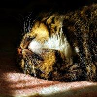 Дневной сон кота Василия. :: Николай Тишкин