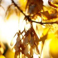 Золотая осень :: astanafoto kazakhstan