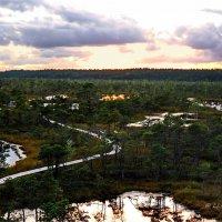 Вечер на болоте. :: Liudmila LLF