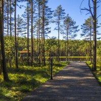 Дорожка к Лунному озеру :: Сергей Цветков