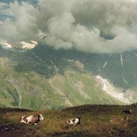 Die Alpen in Österreich :: Zilbiris Genadi